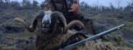 """Hawaiian ram with Knight Mountaineer""Kalsey Nacis"