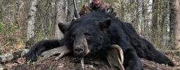 Harvested my Black Bear at Agassiz Outfitters in Manitoba on 23 - May, 2019.  The range was 45 yards and my Knight Bighorn placed the shot perfectly through both lungs.  He didn't make it 50 yards from point of impact.